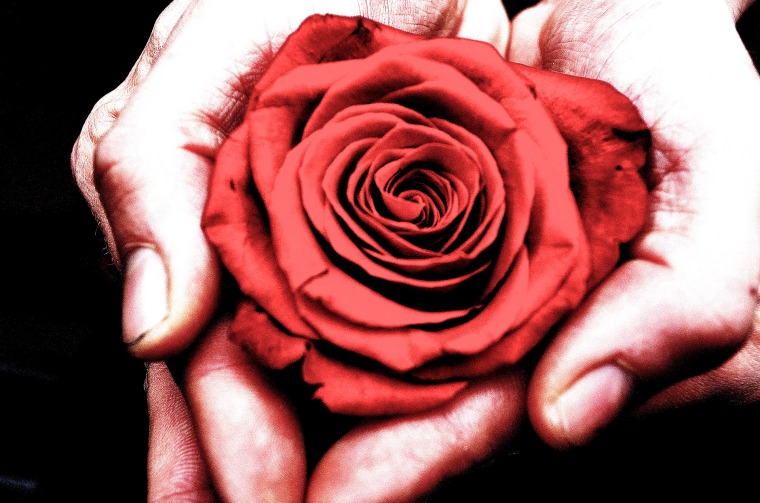 rose-in-the-hands