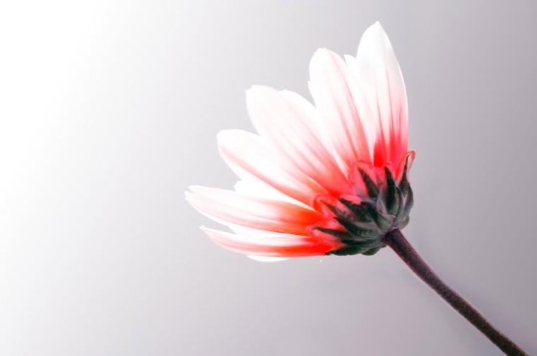 flower-1364217400whR