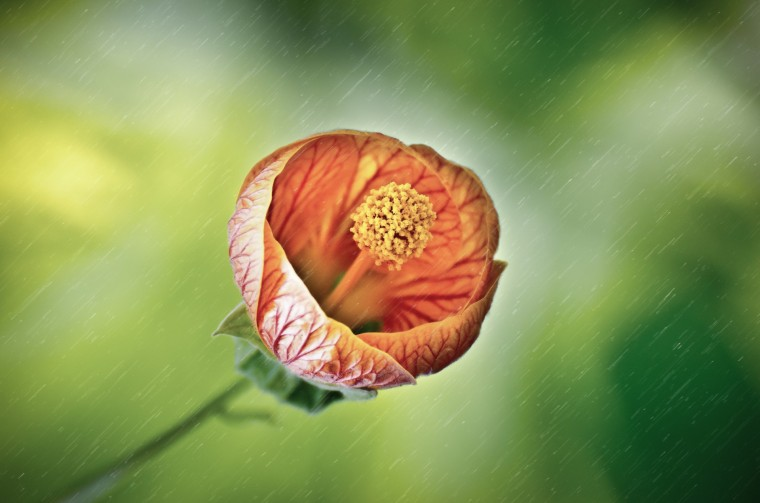 flower-in-the-rain-1391359782G9e